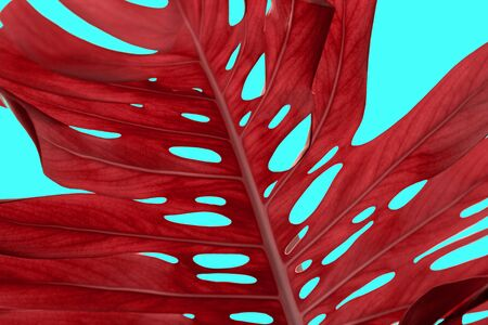 tropical palm, monstera leaves, twigs pattern in dark red color isolated on blue, menthol background.