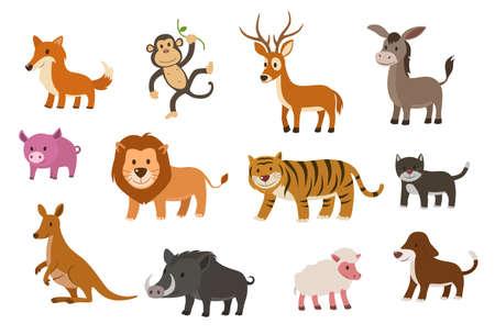 wild donkey: animal collection