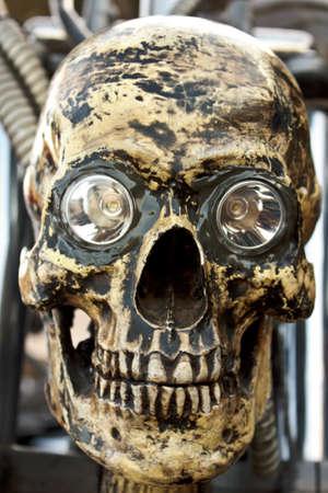 cranium: Cranium  Stock Photo