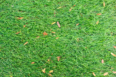 Background Lawn photo