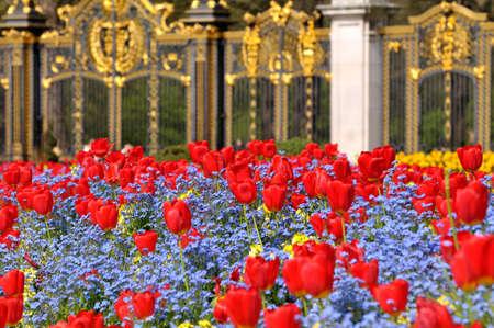 ロンドン バッキンガム宮殿-2009 年 5 月