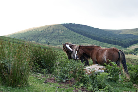Wild ponies, windy days, brecon beacons national park