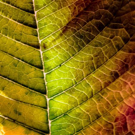 leaf yellowing