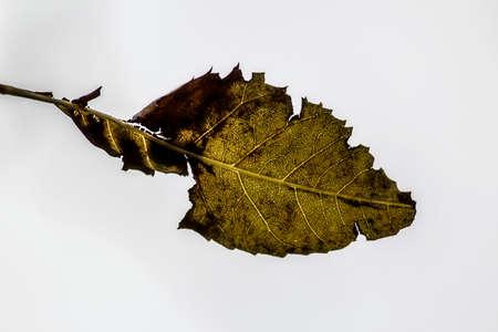 Autumn Banco de Imagens - 89716573