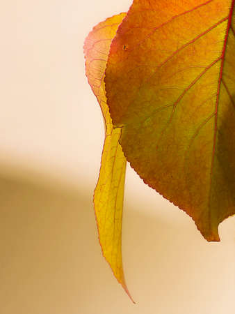 gold colored leaves Imagens - 90131929