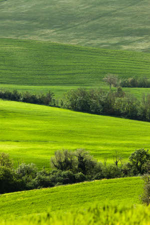 Typical Tuscany landscape, Italy photo