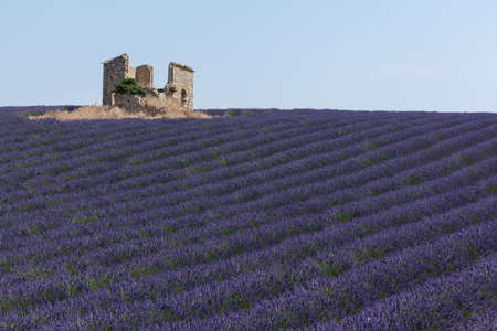 Ruins in a lavender field photo