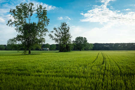 deep green Tuscany meadows under a deep blu sky photo