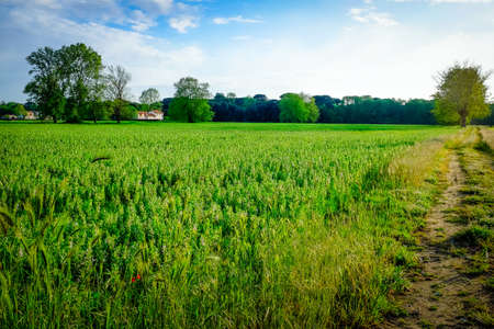 viareggio: deep green Tuscany meadows under a deep blu sky Stock Photo