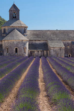 senanque: Blooming field of Lavender in front of Senanque Abbey, Gordes, Vaucluse, Provence-Alpes-Cote d \\\\ \\