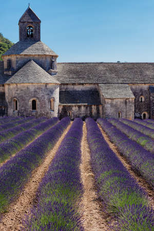 vaucluse: Blooming field of Lavender in front of Senanque Abbey, Gordes, Vaucluse, Provence-Alpes-Cote d \\\\ \\