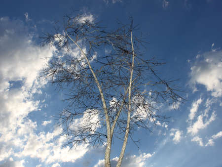 3D barren tree against cloudy blue skies Stock Photo - 9881288