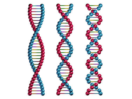 dna chains isolated on white background photo