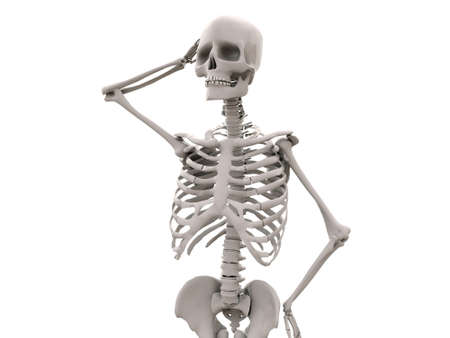 male torso: skeleton isolated on white background