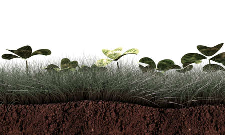 grass section isolated on white background photo