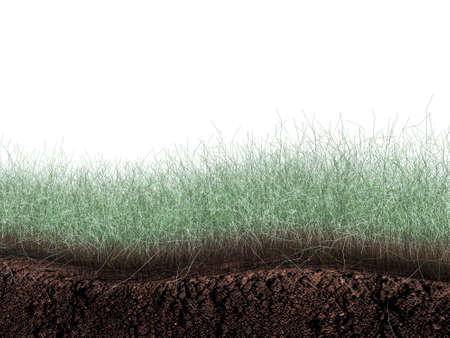 grass and soil section isolated on white background photo
