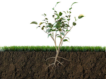 green cross: plant in soil section Stock Photo