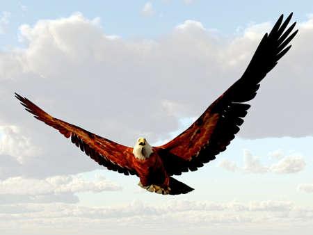 halcones: American Eagle que vuelan en el cielo Foto de archivo