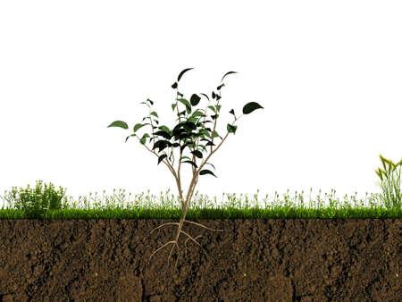 planta con raiz: peque�a planta en la secci�n del suelo