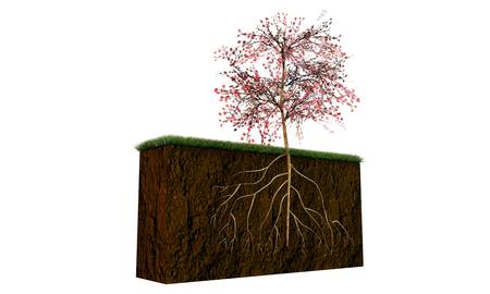 growing inside: tree on a soil section with big roots growing inside