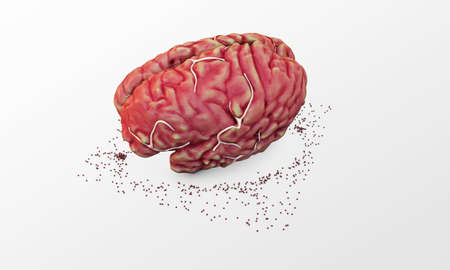 solver: big brain isolated on white background