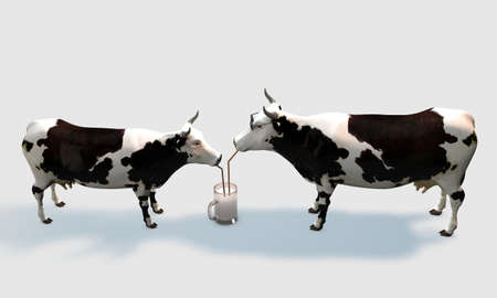 cows drinking milk isolated on white background Stock Photo - 16086569