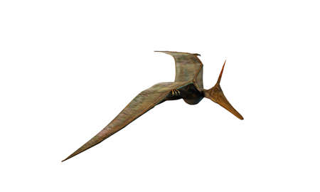 pteranodon: Pteranodon flying isolated on white background Stock Photo