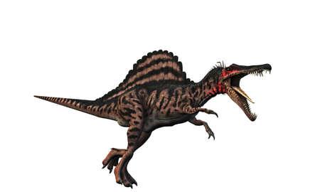 spinosaurus: spinosaurus isolated on white background