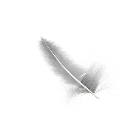 lightweight: white feather isolated on white