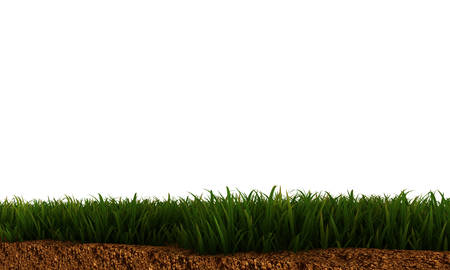illustration of green grass on soil isolated on white background