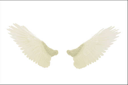 angel white: angel wings isolated on white background