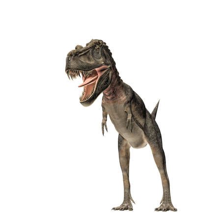 lagartija: Tarbosaurus aislado en blanco