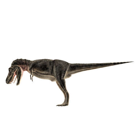 alarming: Tarbosaurus isolated on white background Stock Photo