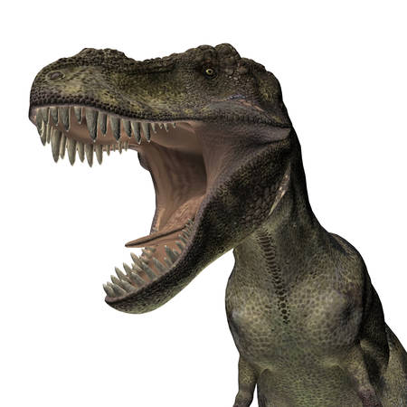 tyrannosaurus: Tyrannosaurus isolated on white