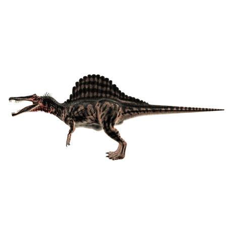 spinosaurus: Spinosaurus isolated on white background Stock Photo