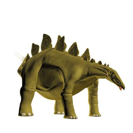 stegosaurus: Stegosaurus aislado en fondo blanco