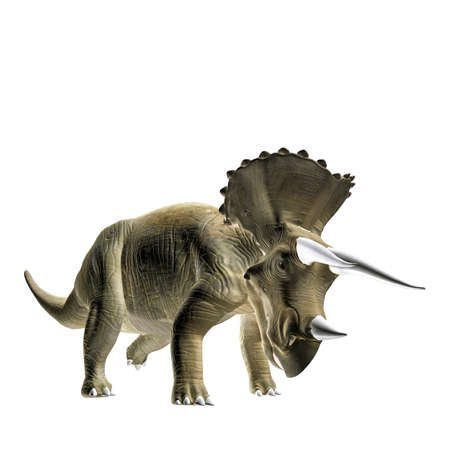 extinction: triceratopos isolated on white background