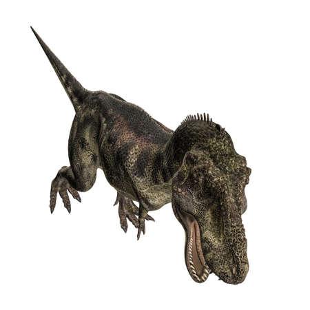 tyrannosaurus: Tyrannosaurus isolated on white background