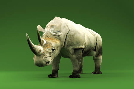 green background: rhinoceros isolated on green background