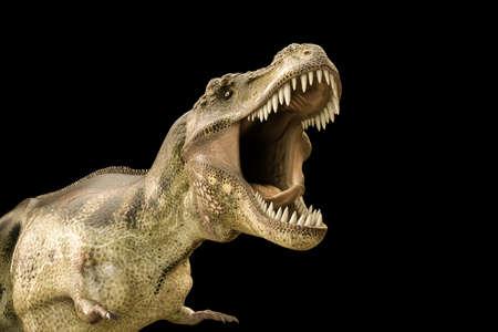 tyrannosaurus: 3d illustration of a Tyrannosaurus rex isolated on black background