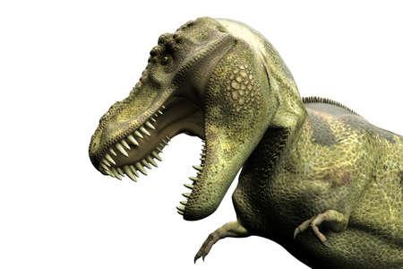 tyrannosaurus rex: 3d illustration of a Tyrannosaurus rex isolated on white background