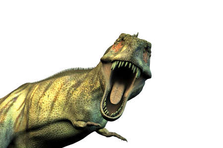 rex: 3d illustration of a Tyrannosaurus rex isolated on white background