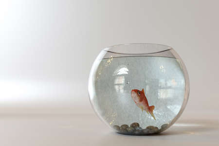 Goldfish into a fishbowl isolated on white background Stock Photo