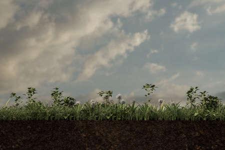 green field on soil slice section 3d illustration