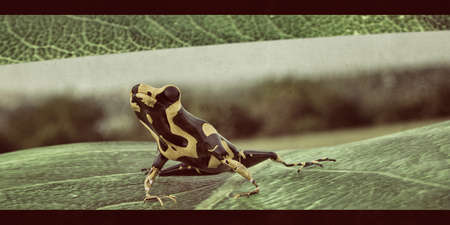 small poison frog on a leaf 3d illustration 写真素材