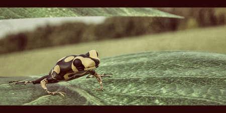 small poison frog on a leaf 3d illustration Zdjęcie Seryjne