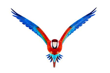 Guacamaya isolated on white background 3d illustration Reklamní fotografie