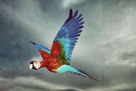Colorful guacamaya flying in the sky 3d illustration