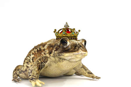 toad with crown isolated on white background 3d illustration