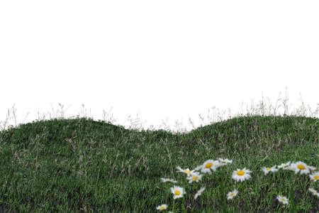 grass isolated on white background 3d illustration
